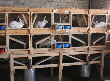клетки для кроликов как сделать
