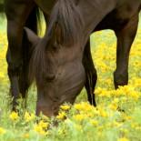 Что едят лошади: особенности кормления