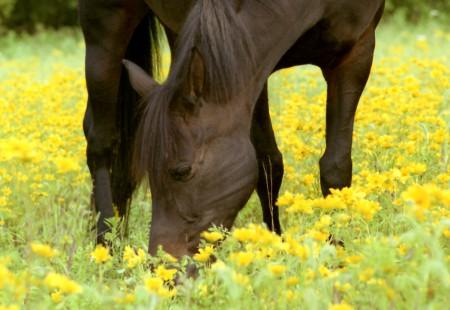 что едят лошади особенности питания