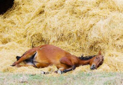 что едят лошади особенности питания кормления