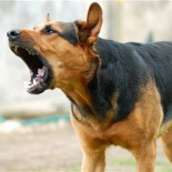 Как отучить собаку лаять не во время: воспитываем правильно