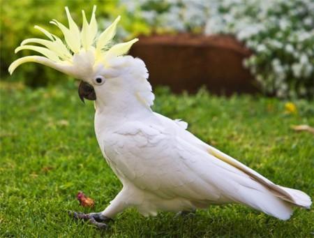 скачать бесплатно говорящего попугая - фото 2