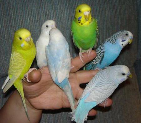 скачать бесплатно говорящего попугая - фото 3