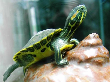 Островок для черепахи