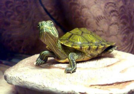 Обустройство аквариума для черепах