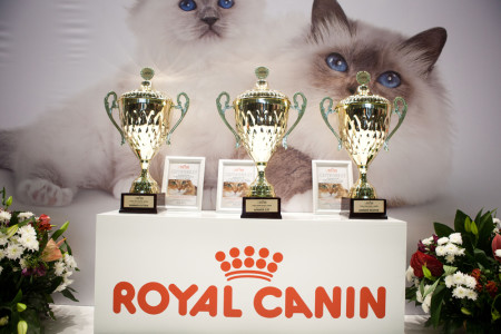 кошачий корм для кошек роял канин royal canin