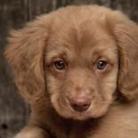 Как отучить собаку метить дома и приучить к лотку