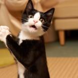 Как отучить кота или кошку драть мебель, обои и другие вещи?