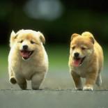 Как правильно воспитать щенка в домашних условиях