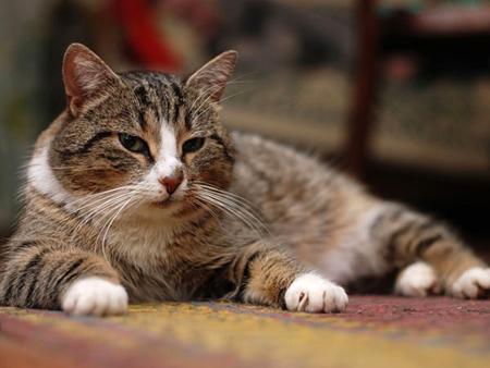 Дальнейший уход за котами и кошками