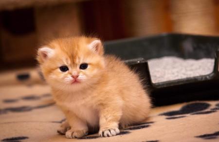 Котенок и лоток