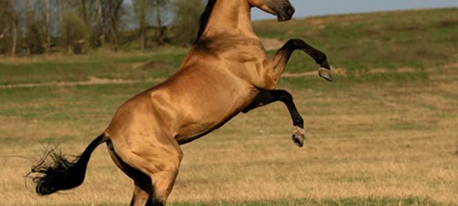 Породы лошадей: классификация, происхождение