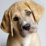 Собаку тошнит: как оказать первую помощь и что делать дальше
