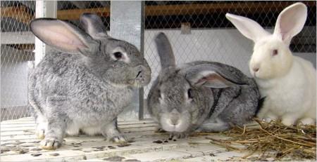Введение комбикорма в рацион кроликов