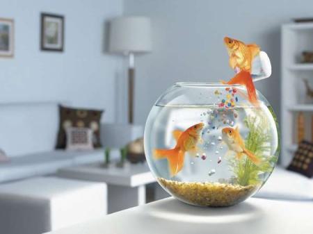 Приобретение и уход за аквариумом