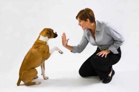 Продолжительность жизни котов и собак
