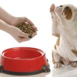 Корм Хилс для собак: особенности продукта