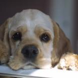 Аллергия у собаки: как помочь питомцу?