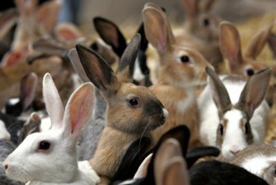 Домашние животные - Фото домашних животных - Виды 38