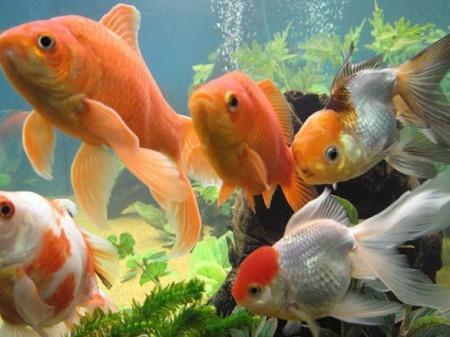 Другие причины смерти рыбок