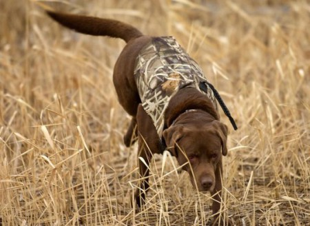 Собака бежит на охоту