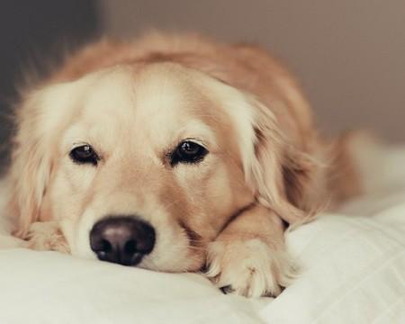Методы лечения мочекаменной болезни у собак