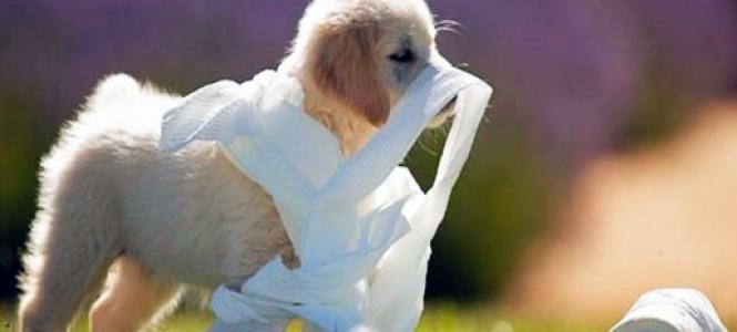 Как приучить собаку к туалету: инструкция по применению