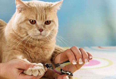 Правила ухода за котом и кошкой