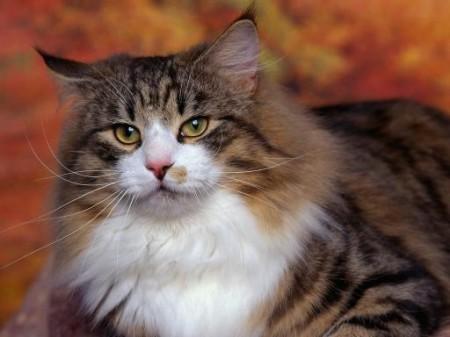 Кошачий возраст по человеческим меркам