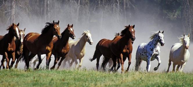 Как масти лошадей влияют на характер и здоровье животного