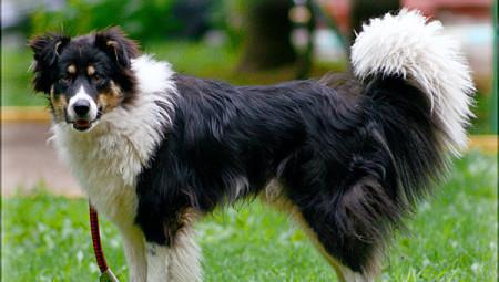Лидеры рейтинга популярных собак