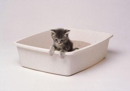 Котик в туалете