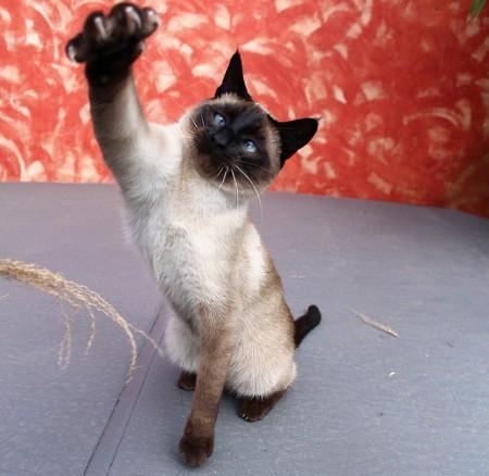 Горячий кот