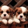 Две собаки в кошике