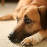 Симптомы, причины и способы лечения мочекаменной болезни у собак