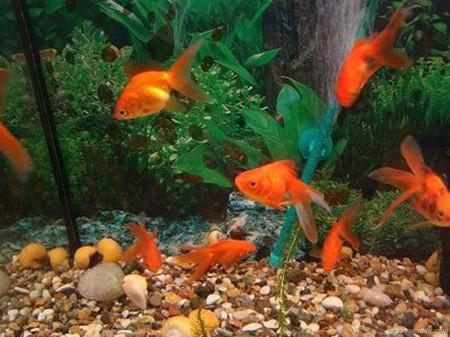 Причины гибели аквариумных обитателей