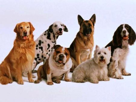 Как определить большую породу собак?