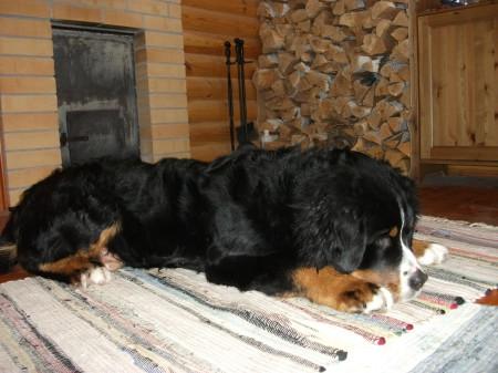 Методы борьбы с выпадением шерсти у собак
