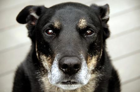 Собаки в пожилом возрасте