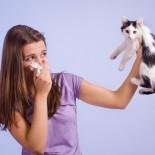 Какие гипоаллергенные породы кошек подойдут аллергикам?