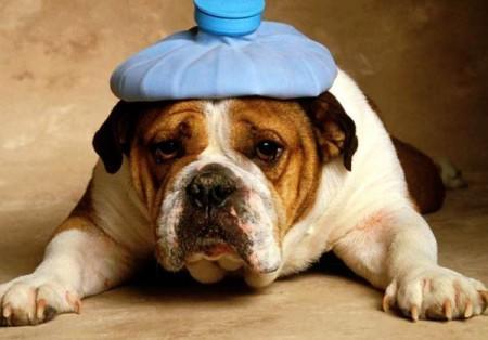 Собаку тошнит: чем помочь?