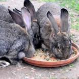 Достоинства и недостатки комбикорма для кроликов