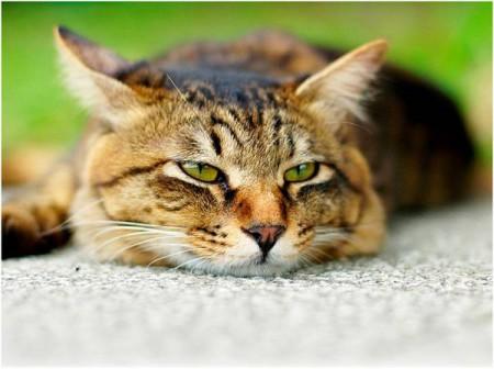 Кот лежыт