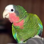 Какую породу попугаев выбрать: рекомендации