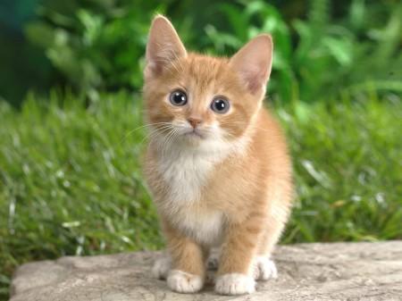 Как узнать возраст котёнка?