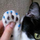 Преимущества и недостатки колпачков на когти кошкам