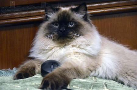 Правила поведения владельца кота