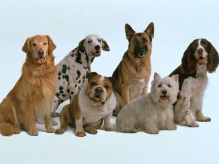 Большие собаки, не включенные в рейтинг