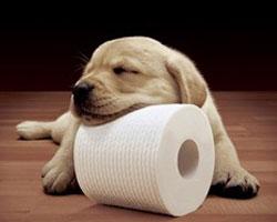 Собака и бумага