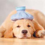 От чего зависит температура у собак?